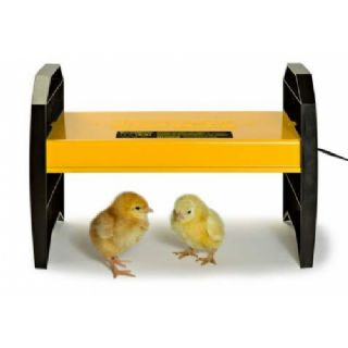 EcoGlow 20 Chick Brooder - Electric Hen